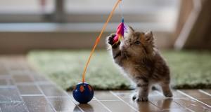 7 saveta za usvajanje nove mace