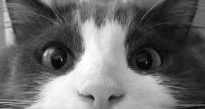 5 saveta za mirniju macu tokom noći