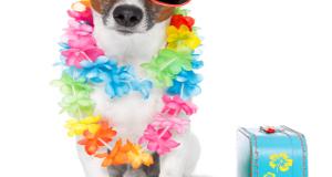 Kako (i da li) sa psom na odmor?