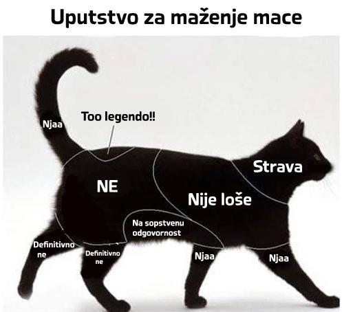 Maženje_mačke