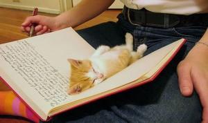 Maca_knjiga