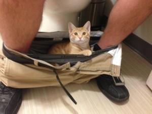 Maca_toalet