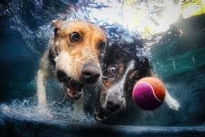 dog-chasing-ball-300x200