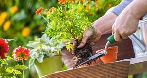 5 najtraženijih biljaka u LimundoGradu