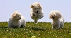 5 načina da se zabavite sa svojim psom! :)