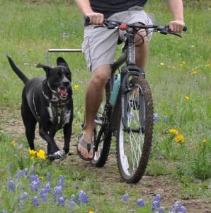 voznja bicikla sa psom
