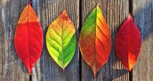 4 saveta za lepšu jesen