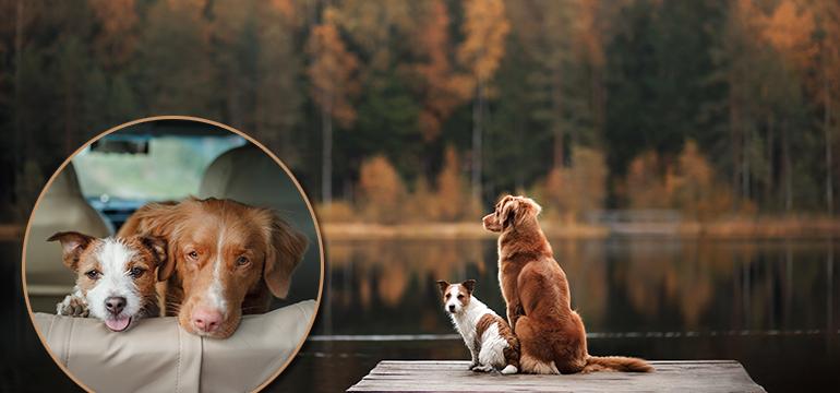 Putovanje sa psom