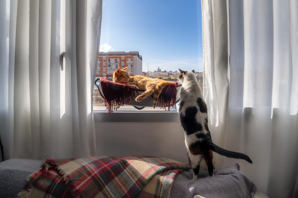 ležaljka za prozor