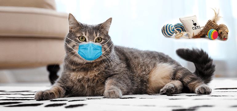 Kako da mačka bude srećna u stanu